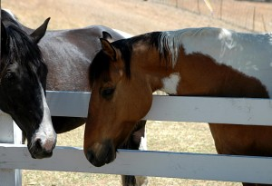 Horse Chat at Pats @ Hylofield | Dilwyn | United Kingdom